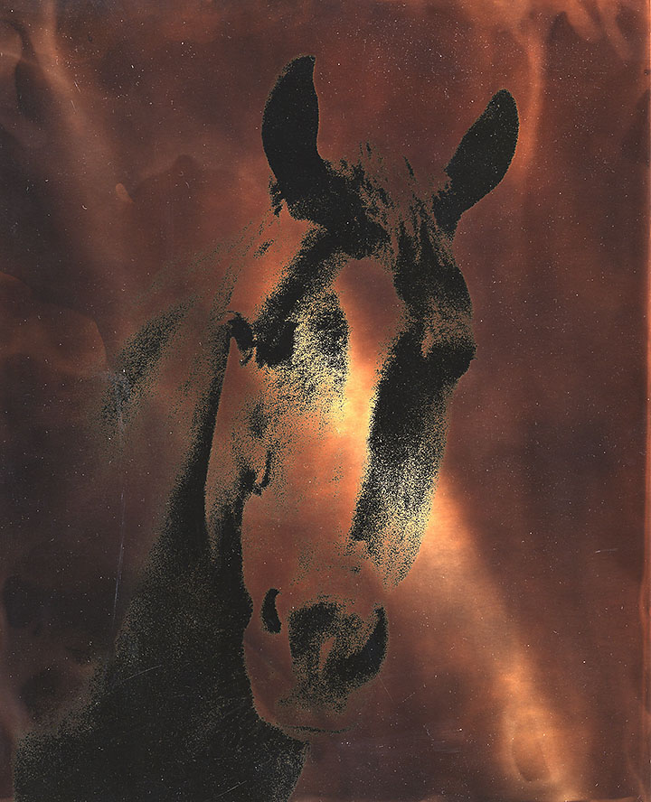 Ted_Nichols_duotone-horse