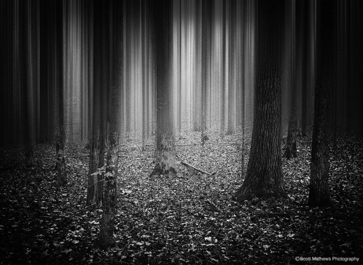 Scott_Mathews_in_the_forest