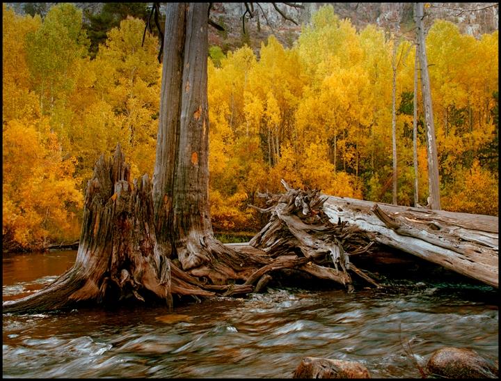 Collins_Bill_Aspen at Rush Creek_2