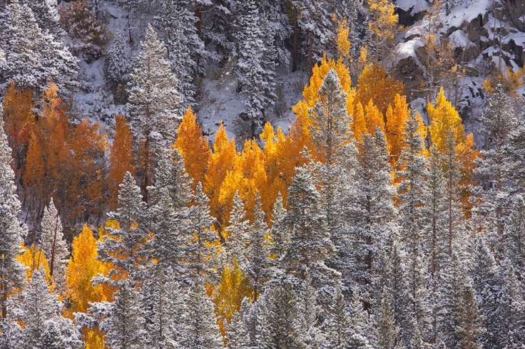Mathews_Scott_Aspen-Snow_2