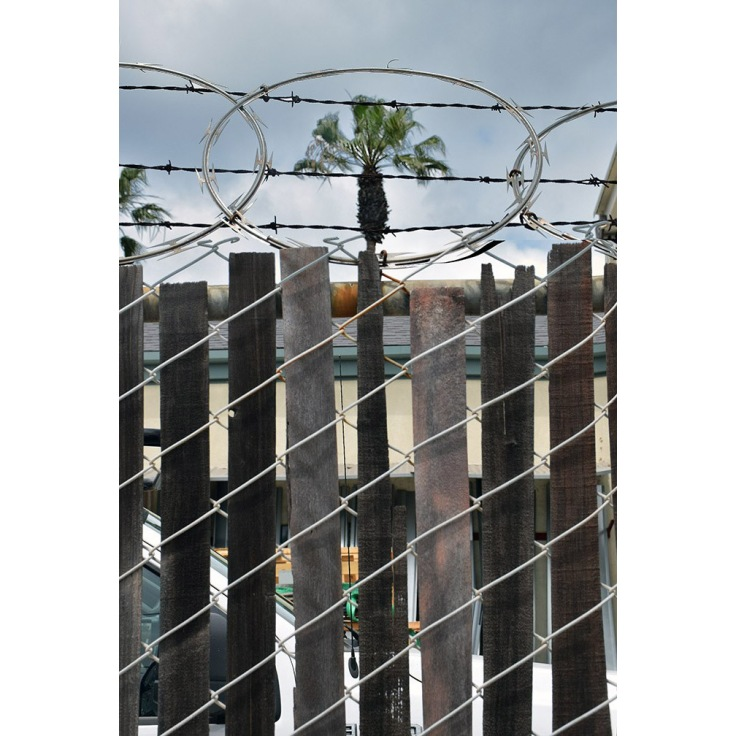 Karl3_Razor wire palm tree.jpg